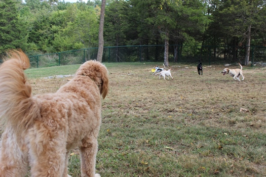 Harrisonburg Dog Park
