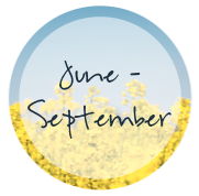 June - September Events in Harrisonburg, VA | Harrisonblog