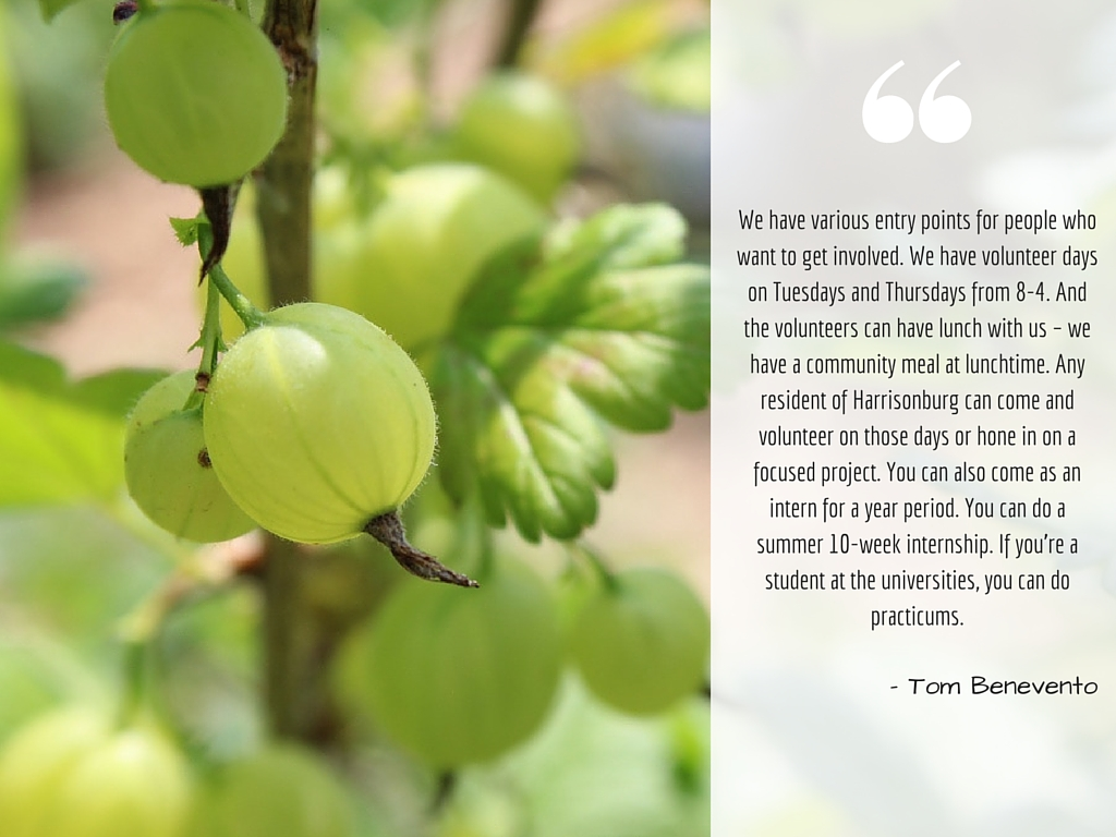 Vine & Fig   The New Community Project   Harrisonburg