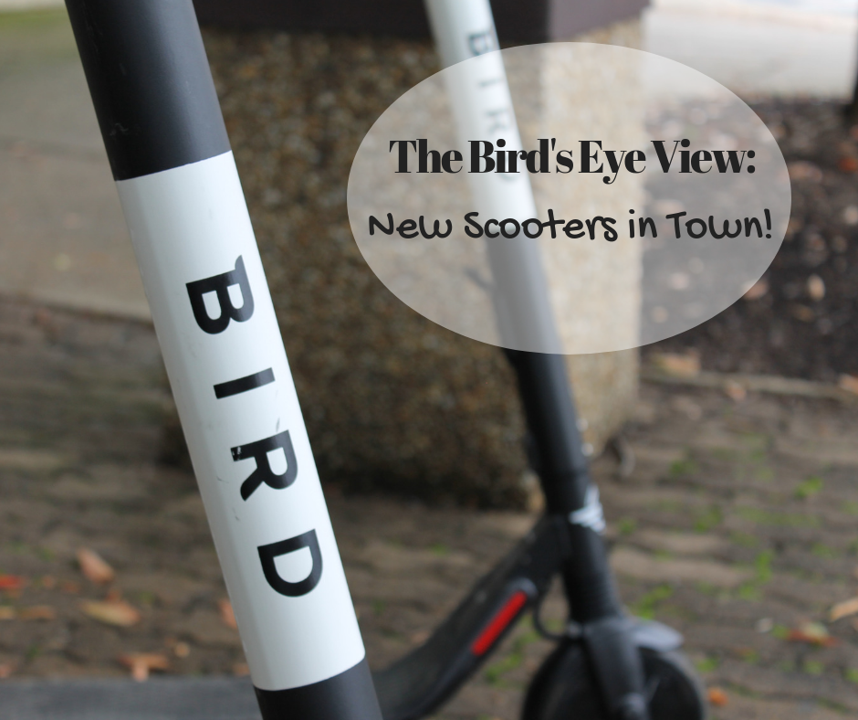 Bird Scooters | Harrisonburg Homes Team