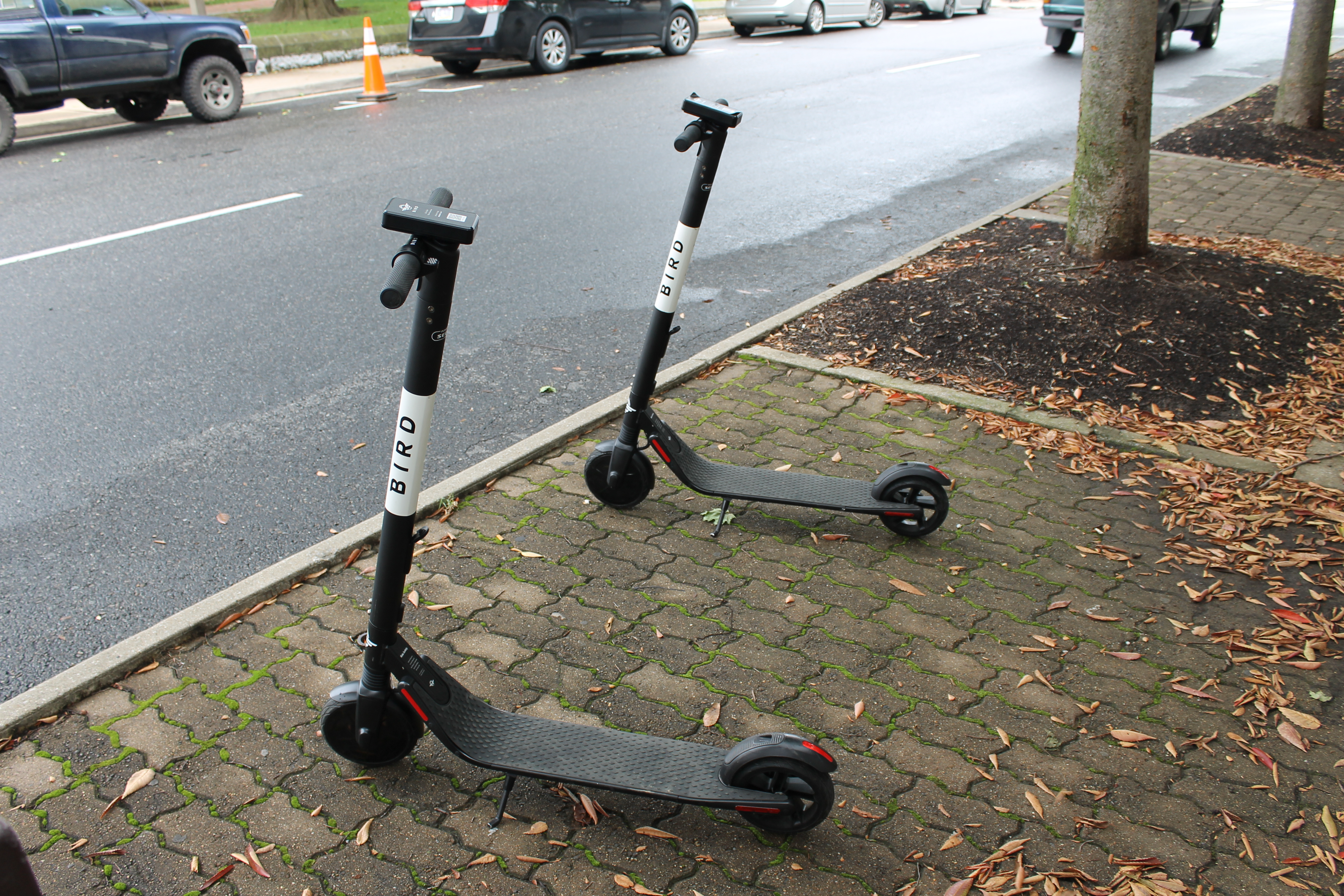 Bird Scooters | Harrisonburg